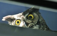 owl2copy