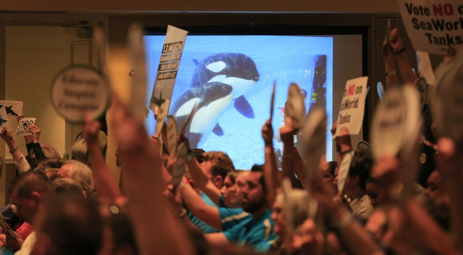 An orca whale image is shown on the screen as People for the Ethical Treatment of Animals (PETA) and other animal rights groups hold up signs next to Sea World supporters attending the California Coastal Commission meeting to consider a proposal by SeaWorld to build a bigger holding area for its orca whales , at the Long Beach Convention Center in Long Beach, Calif., on Thursday, Oct. 8, 2015. (Allen J. Schaben/Los Angeles Times/TNS)