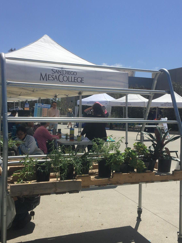 Mesa+Botany+club+displayed+and+sold+plants.