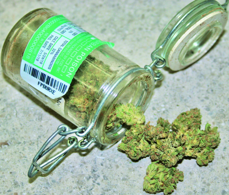 Sativa strain Durban Poison contains 26% THC, the active ingredient in marijuana
