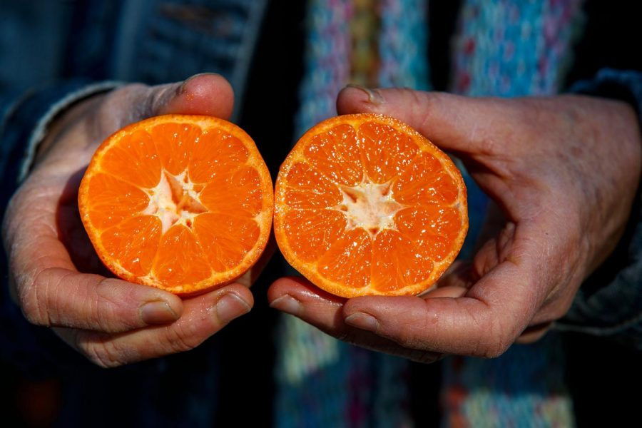 Tangerines+and+citrus+fruits+are+an+amazing+source+of+Vitamin+C.+