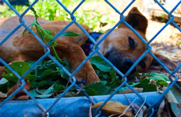 Animal Health Technology Program celebrates 15th annual Pet Wash Fundraiser