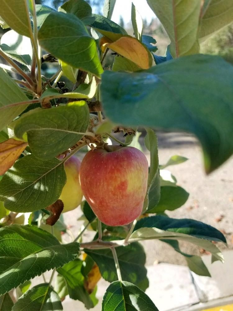 Fruit for students