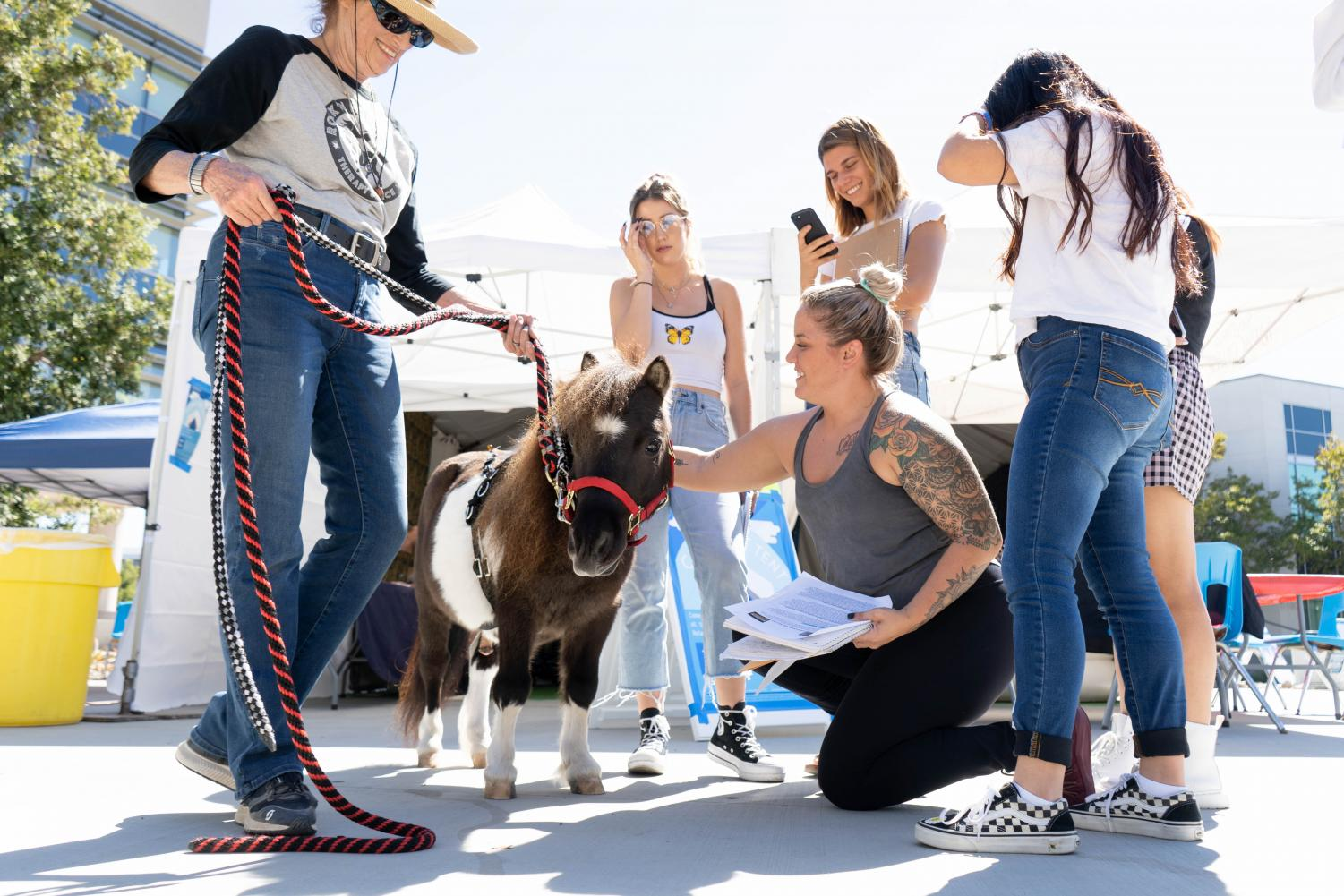 The Comfort Tent's licensed therapy pony graces students with her presence.  Photo Credit: Mesa Office of Communications
